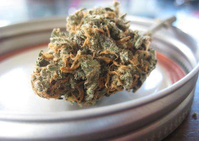 pure vida cannabis strain
