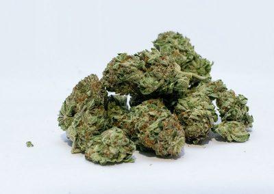 original glue cannabis strain